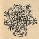 Gardening Tip - Christmas Cactus (ref: e1060g)