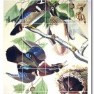 Audubon Birds Tile Wall Room Idea Renovations Design Residential