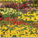 Flowers Picture Living Tile Murals Room Design House Renovation