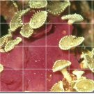 Underwater Image Dining Murals Room Remodeling Home Contemporary