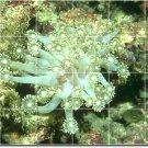 Underwater Image Floor Mural Kitchen Construction House Decorate