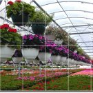 Flowers Picture Room Tile Living Murals Construction Idea House