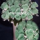 84 Silk Rose Flowers with Raindrops-Wedding Roses Flowers - Pistachio