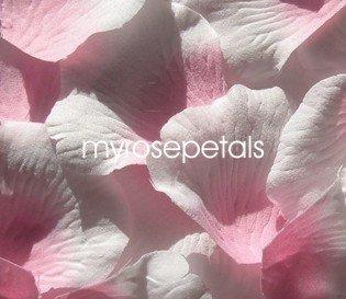 Petals - 1000 Silk Rose Petals Wedding Favors -  Two Tone - Pink/White