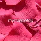 Petals - 200 Silk Rose Petals Wedding Favors - Solid Colors - Hot Pink