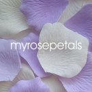 Petals - 200 Wedding Silk Rose Flower Petals Wedding Favors - Lavender & Ivory