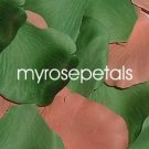 Petals - 200 Wedding Silk Rose Flower Petals Wedding Favors - Peach & Green
