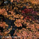 Autumn Colors Photo Print 8x10