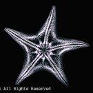 Starfish Black & White Photo Print 8x10