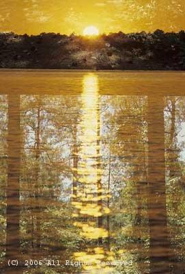 Pine Forest Photo Print 8x10