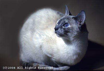 Space Kitty Photo Print 8x10