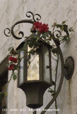 Rose Lantern Giclee Art Print 12x16
