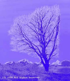 Endurance Tree Giclee Art Print 12x16