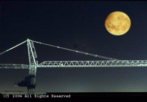 Moon Light Crane Giclee Art Print 12x16