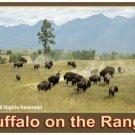 Buffalo on the Range Giclee Art Poster 16x20