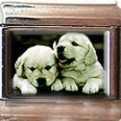 GOLDEN RETRIEVER PUPPIES ITALIAN CHARM CHARMS