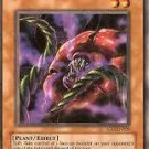Rafflesia seduction (Ultimate Rare)