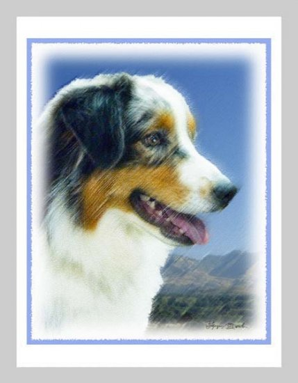 6 Australian Shepherd Note or Greeting Cards