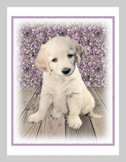 6 Golden Retriever Puppy Note or Greeting Cards