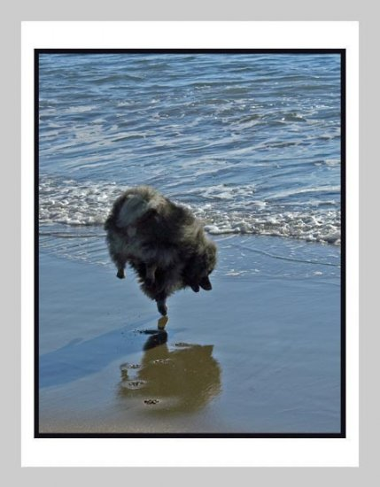 "6 Keeshond Note or Greeting Cards """"Keeshond Ballet"""""