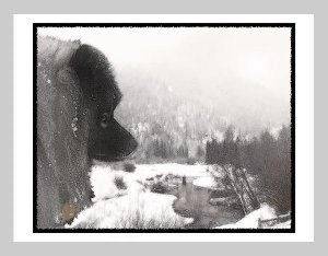 "6 Keeshond Note or Greeting Cards """"Shadow's Creek"""""