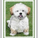 6 Lhasa Apso Puppy Note or Greeting Cards