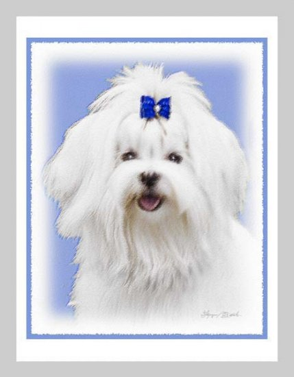 6 Maltese Note or Greeting Cards