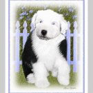 6 Old English Sheepdog Puppy Note or Greeting Cards