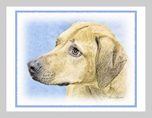 6 Rhodesian Ridgeback Note or Greeting Cards