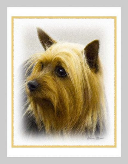 6 Silky Terrier Note or Greeting Cards