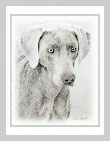 6 Weimaraner Note or Greeting Cards