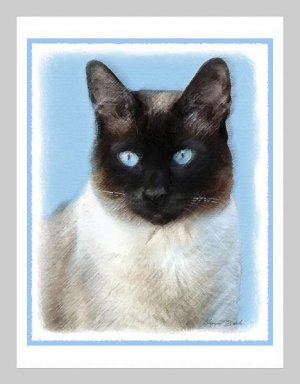 6 Siamese Cat Note or Greeting Cards