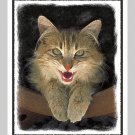 6 Mad Yellow Cat Note or Greeting Cards