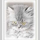 6 Gray Kitten Note or Greeting Cards