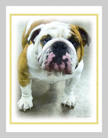 6 Bulldog Note or Greeting Cards