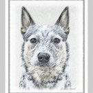 6 Australian Cattle Dog Note or Greeting Cards