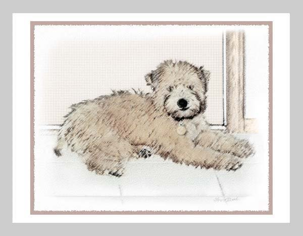 6 Soft Coated Wheaten Terrier Puppy Note or Greeting Cards