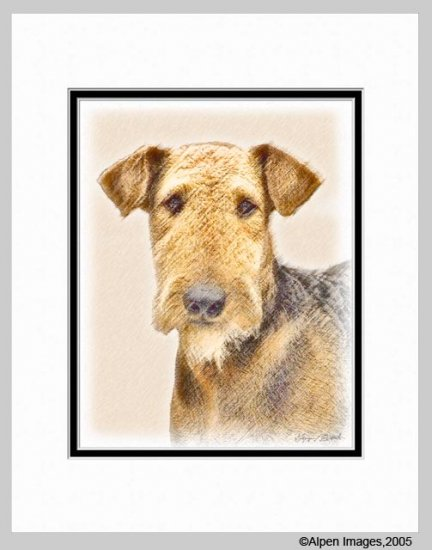 Airedale Terrier Dog Art Print Matted 11x14