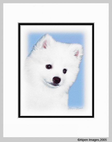American Eskimo Matted Dog Art Print 11x14