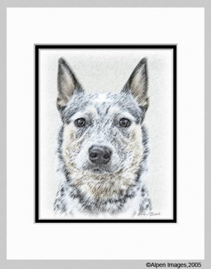 Australian Cattle Dog Art Print Matted 11x14