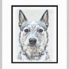 Australian Cattle Dog Art Print Matted 11x14