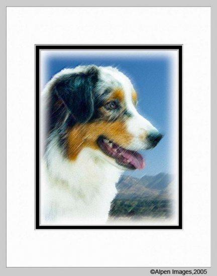 Australian Shepherd Art Print Matted 11x14
