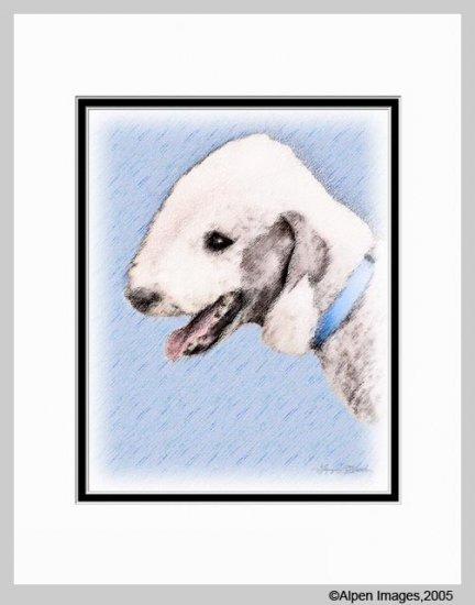 Bedlington Terrier Matted Dog Art Print 11x14