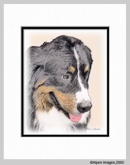 Bernese Mountain Dog Art Print Matted 11x14