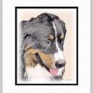 Bernese Mountain Dog Art Print Matted 11x14