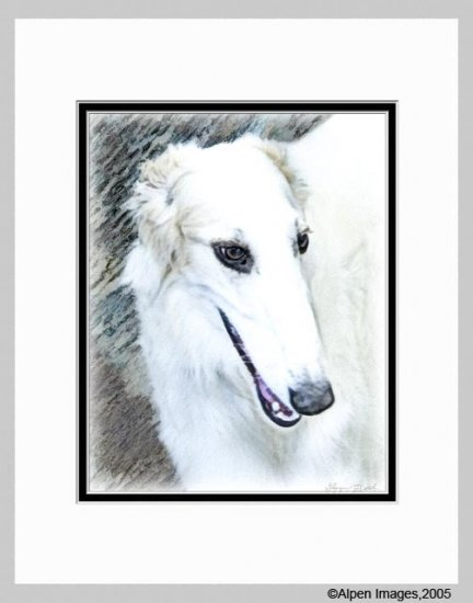Borzoi Russian Wolfhound Dog Art Print Matted 11x14