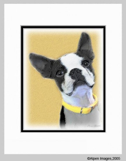 Boston Terrier Matted Art Print 11x14
