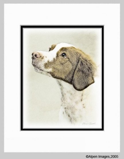 Brittany Spaniel Matted Dog Art Print 11x14