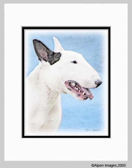 Bull Terrier Matted Dog Art Print 11x14