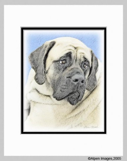 Bullmastiff Dog Art Print Matted 11x14